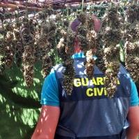Desmantelan en Alburquerque una plantación de marihuana con 225 plantas y 5 kilos de cogollos