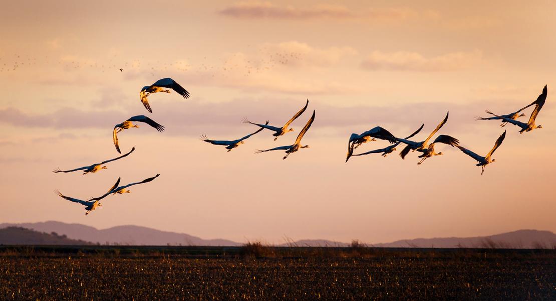 Extremadura se promociona en la principal feria de turismo ornitológico de Europa