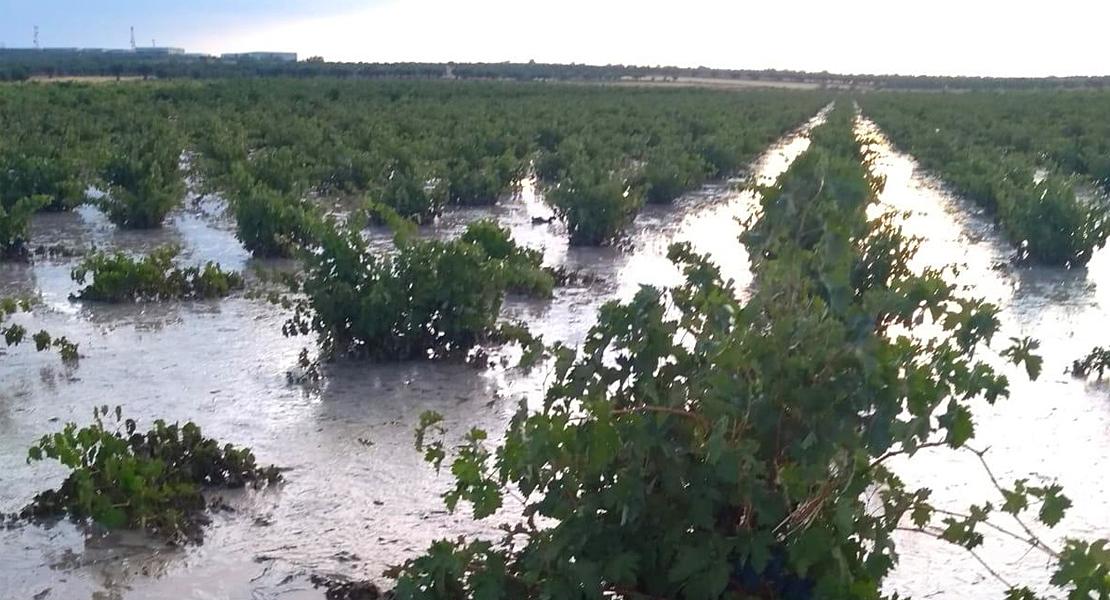 Graves daños por pedrisco, viento y lluvia en varias producciones agrícolas