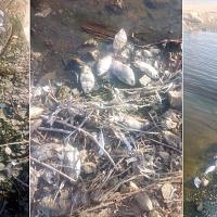 Denuncian la aparición de miles de peces muertos en la presa de Villalba de los Barros
