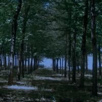 Rescatan a 24 niños perdidos en un bosque de Cáceres