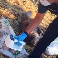 Dos detenidos por matar y arrojar presuntamente en un pozo a cuatro galgos