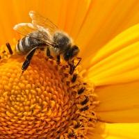 Diputación ofrece formaciones sobre como mejorar el hábitat animal y vegetal