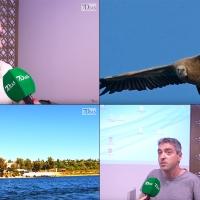 Orellana la Vieja rinde culto a su ornitología en el IV Día de las Aves