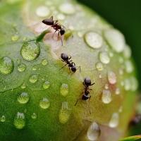 La lluvia regresa para darle vida al campo extremeño