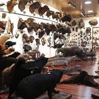 Crean una petición para cancelar la exposición de animales disecados en Olivenza