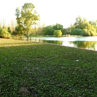 La UME se despide del Guadiana tras retirar 31.000 toneladas de camalote