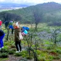 La vida se abre paso en la cacereña 'Sierrilla' tras el incendio de 2017