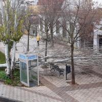 El temporal provoca destrozos en árboles y muros de Badajoz