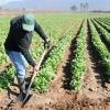 "Asaja Extremadura considera un ""despilfarro"" crear tantas vicepresidencias y ministerios"
