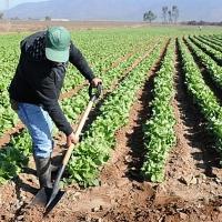 Los agricultores protestarán en Agroexpo por los precios ruinosos