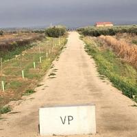 Guareña ya cuenta con una senda verde de cuatro km y con cinco merenderos