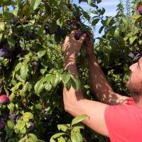 Cooperativas Extremadura se suma a las movilizaciones por el campo extremeño