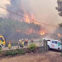 1.600 árboles autóctonos para repoblar Sierra de Gata