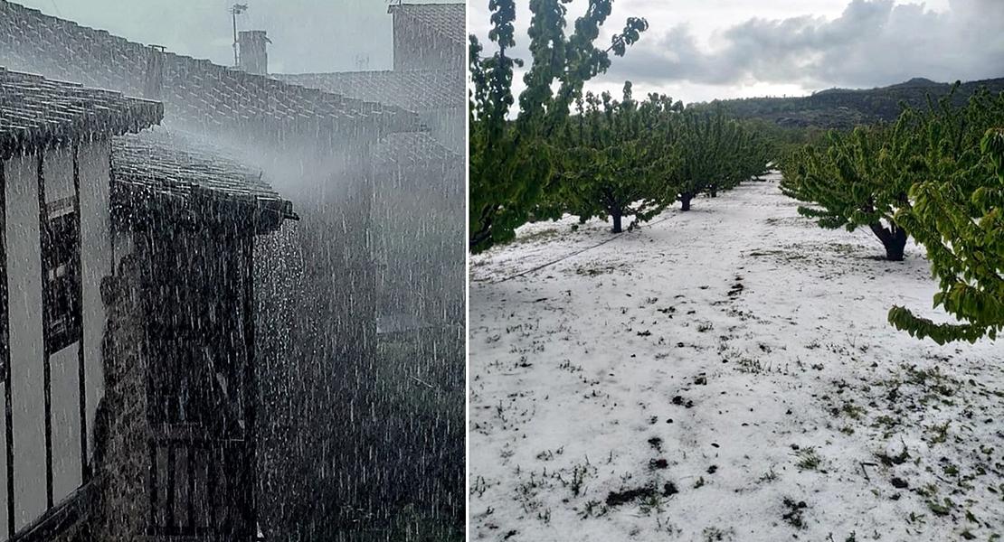 Paralizada la campaña de la cereza por la lluvia y granizo