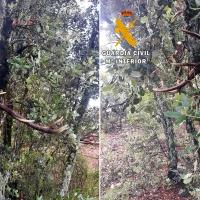 Caza furtiva: Abate tres ciervos de forma ilegal en Extremadura