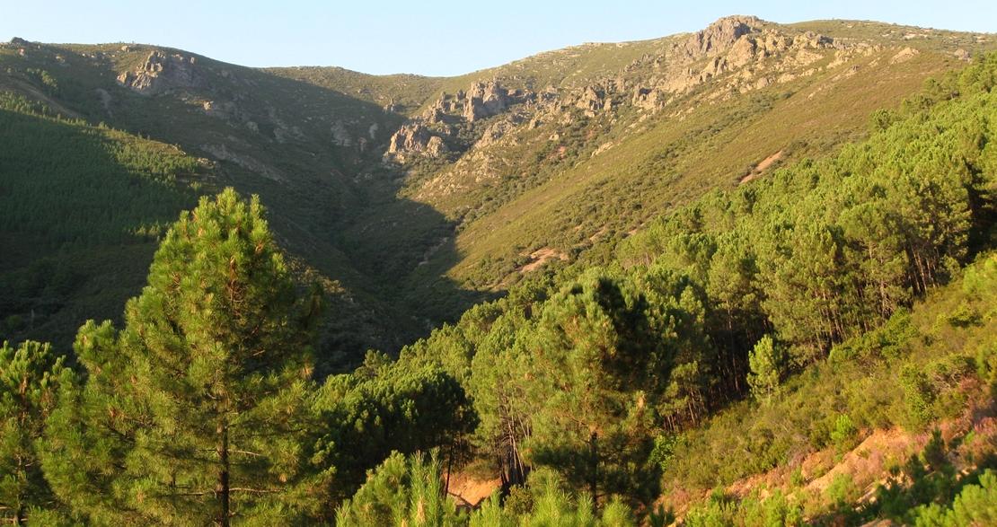 Convenio de colaboración para reforestar 50 hectáreas en Villanueva de la Sierra
