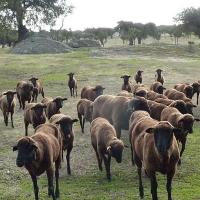 Requisitos para las ayudas a explotaciones agroganaderas afectadas por COVID-19