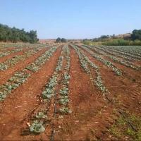 Agricultura anuncia la cifra definitiva de la PAC que le corresponde a España