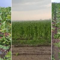 La tormenta arruina cosechas en plena campaña de recogida en la provincia de Cáceres