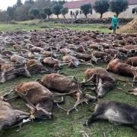 El sector cinegético extremeño en contra de la muerte de 500 animales en Portugal