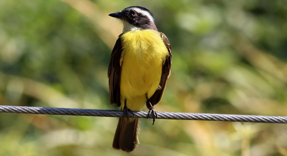 Abierto el plazo de solicitudes para talleres semipresenciales de ornitología