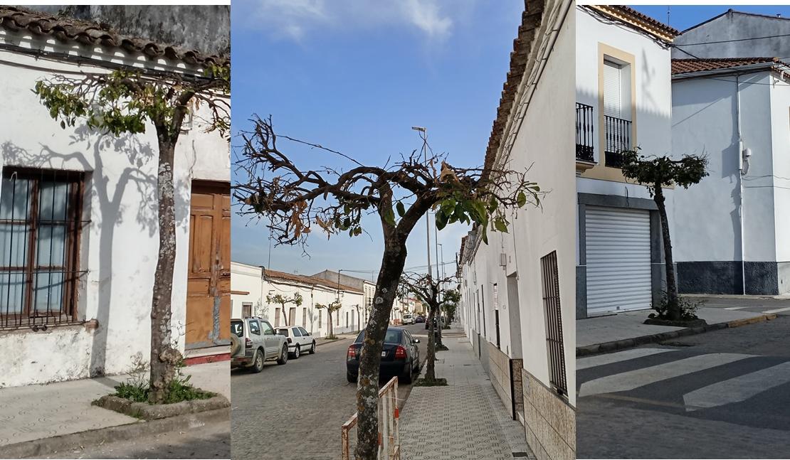 Una localidad extremeña nominada a 'La Motosierra de Atila' por la poda indiscriminada de árboles